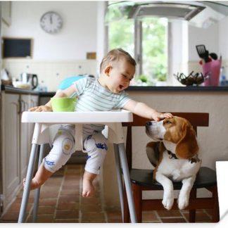 Baby in kinderstoel aait een hond 30x20 cm - klein